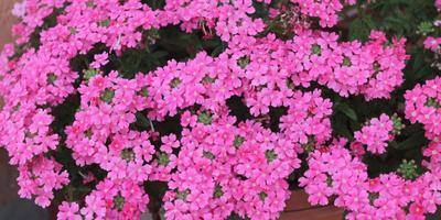 Красивые цветы из своих семян. Это возможно!
