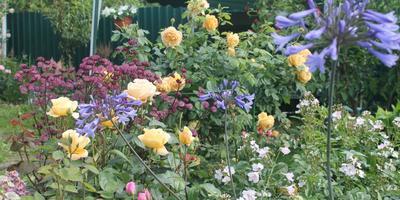 Королевы цветников-3