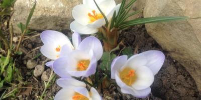 Третья весна у меня во дворе...