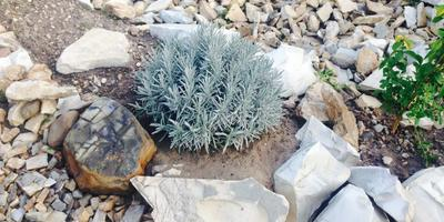 Мой серый нескучный сад