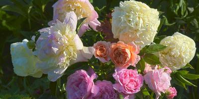 Локальные подкормки растений долгоиграющими удобрениями