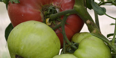 Чем лечить заболевшее растение: популярные и действенные фунгициды