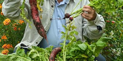 Плодородная почва на участке определяет урожай в любой год