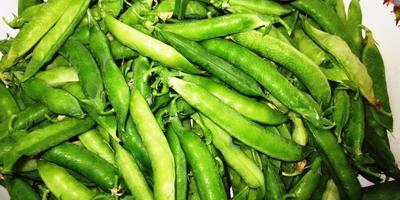 Как сохранить горошек зеленым на зиму?