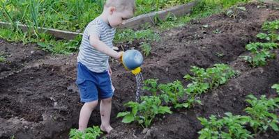 Юный огородник
