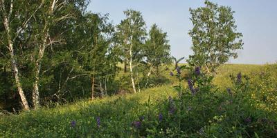 Лесной урожай