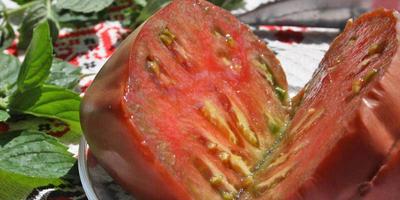 День сибирского помидора