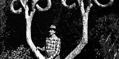 Скульптуры из живых деревьев как элемент ландшафтного дизайна