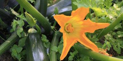 Урожай: собираем и поджидаем