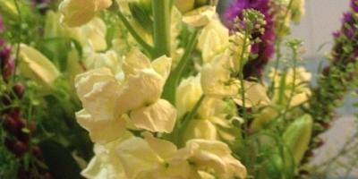 Подскажите названия цветов