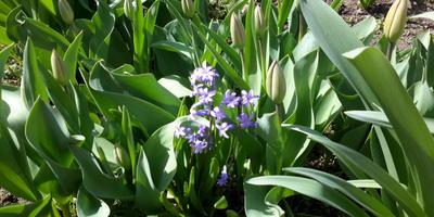Нужно ли выкапывать на лето цветок?
