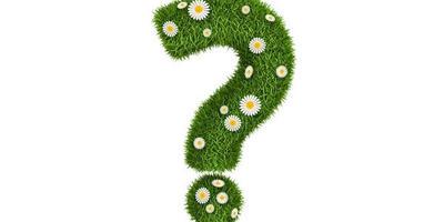 Правильно ли организован цветник?