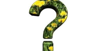 Как заставить цвести герань?