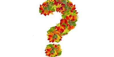 Почему каланхоэ не цветет?