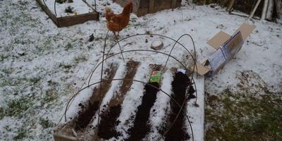 Курятник - подготовка к зиме