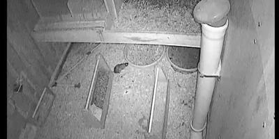 Куры, мыши, крысы и отпугиватель