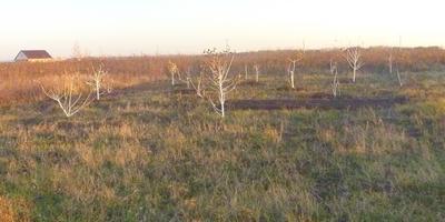 Фруктовые деревья