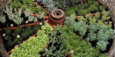 Сажаете ли вы овощи среди цветов?