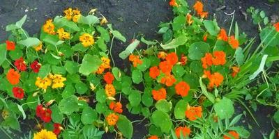 Деревенские мотивы в цветниках