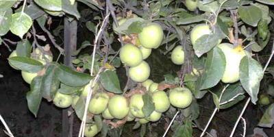Яблочно - виноградный компот