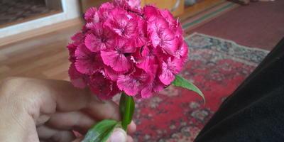 Как называется цветок?