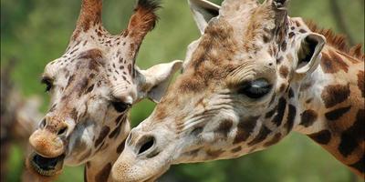 Положительные эмоции в зоопарке