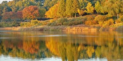 Корейская осень (цветотерапия)