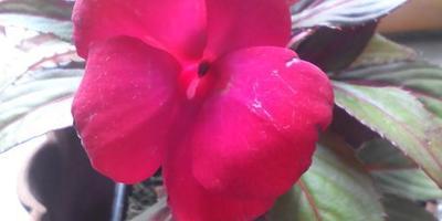 Подскажите, что это за цветок