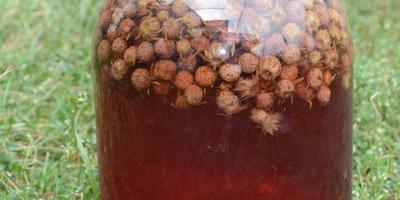 Самые вкусные компоты на зиму