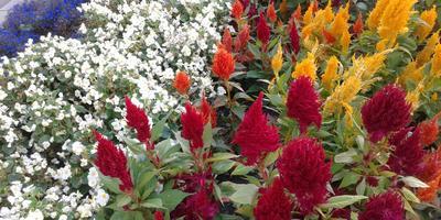 Помогите, пожалуйста, с определением названия этих цветов