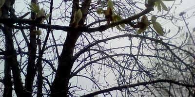 Такая в городе весна