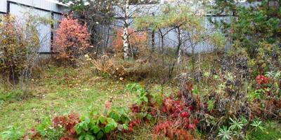 Осень. Сказочный чертог...  (Борис Пастернак)