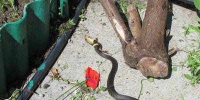 Лягушки и другие на моём участке