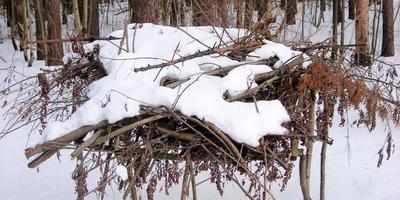 Зимнее хранение хвороста в лесу))