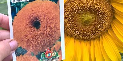 Потерянная надежда: от семян до урожая