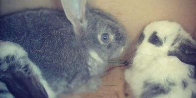 Мы - кролиководы!