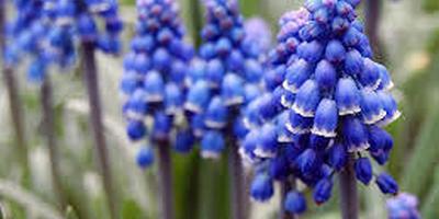 Помогите узнать растение по описанию