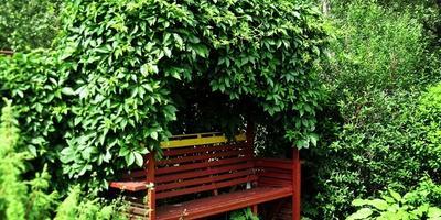 Моя любимая скамейка