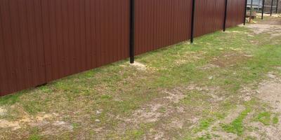 Можно ли из леса пересадить маленькие сосенки?