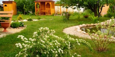 Спирея для украшения сада...