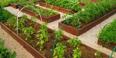 Мой небольшой огород...Приходите посмотреть,что у меня на нём растет...