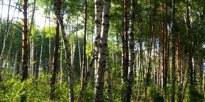 Прогулка по сказочному лесу...