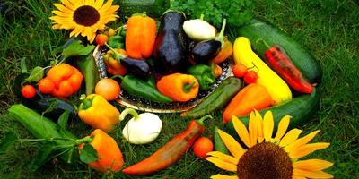 Яркие краски уходящего лета, или Осенние радости начинающей дачницы...