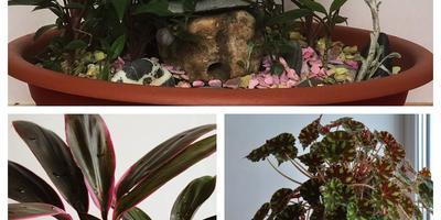 Домашние растения и чуть-чуть огорода на подоконнике