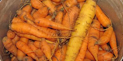 Морковные котлеты, или Как утилизировать мелкую морковку