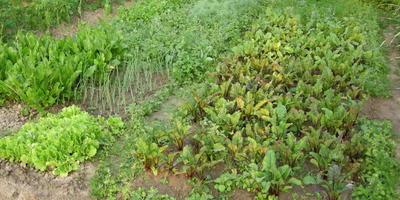 Так ли я поняла применение природного земледелия