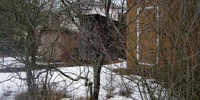 Что за налет на деревьях?