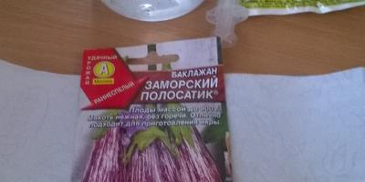 Баклажан Заморский полосатик. Тест на всхожесть