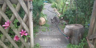 Кот Витас приглашает семидачников в гости!