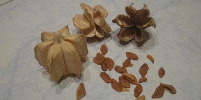 Помогите определить что за семена
